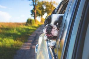Viajar en coche con perros